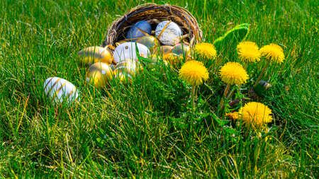 Easter background. Golden egg with yellow spring flowers in celebration basket on green grass. Easter hunt concept