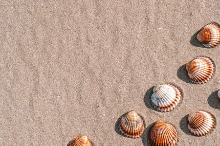 Summer concept background with seashells, shells on sand tropical sea beach. Design of summer vacation holiday concept