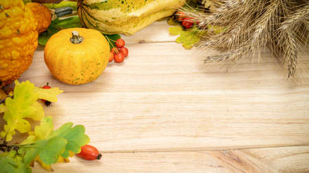 Thanksgiving dinner. Autumn Natural harvest with rye spike orange pumpkin, fall dried leaves, red berries and acorns, chestnuts on wooden background. For seasonal offers and holiday post card