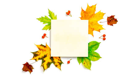 Autumn leaves background. Dried green leaves, yellow leafs and red berries in shape frame isolated on white background with blank space for text. Concept of Thanksgiving day or Halloween