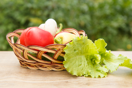 harvested: Just picked tomatoes and yellow bell pepper in a wicker basket with salad leaves. Just harvested vegetables Stock Photo