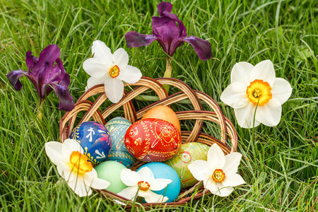 Painted and colorful Easter eggs in wicker basket and flowers of narcissus and iris in green grass