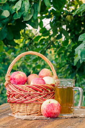 Just picked apples in a wicker basket and apple cider in glass goblet on wooden boards with leaves of apple tree on the background. Just harvested fruits. Organic drinks
