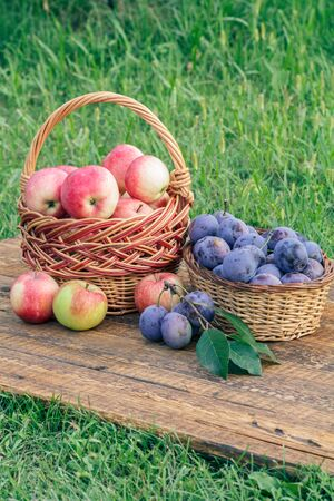 Just picked ripe red apples and plums in wicker baskets on old wooden boards with garden green grass Stockfoto