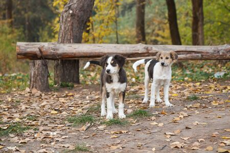 Homeless little dogs looking at something on the road in the forest in autumn.