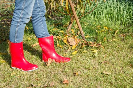 Female gardener in red rubber boots cleans a garden with a rake in autumn.