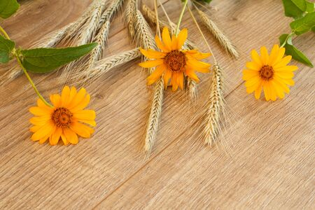 Spikelets of wheat and yellow flowers on wooden boards. Top view. Zdjęcie Seryjne