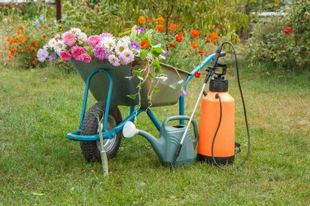 Morning after work in summer garden. Wheelbarrow with flowers, watering can and garden pressure sprayer on green grass.