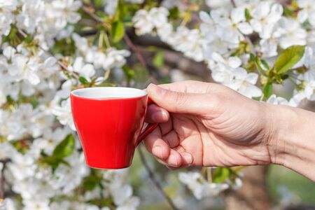 Female hand holding a porcelain cup of coffee with flowering cherry tree on the background. Selective focus on cup.