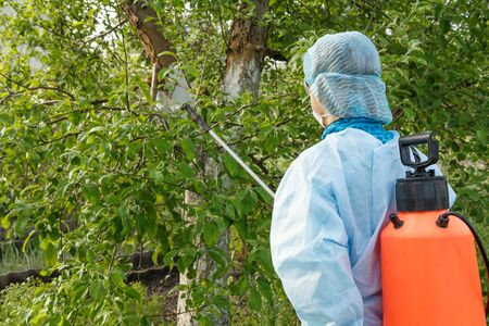 Woman in a protective suit and a mask is spraying an apple tree from fungal disease or vermin with a pressure sprayer and chemicals in the spring orchard. Back view. Stock Photo