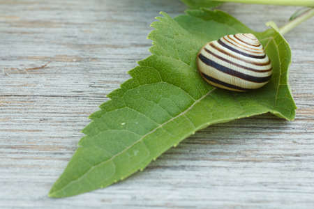 Close-up view of the green leaf with the snail on the wooden board. Shallow depth of field. Focus on the flower. 写真素材