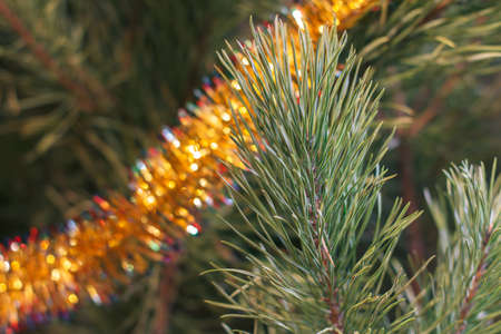 Spruce branches with toys and festive lights with sparkles. Christmas and New Year concept.