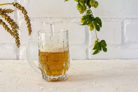 Glass mug of beer with ears of barley and a hop branch on the white background.