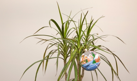 New year decoration in a palm tree