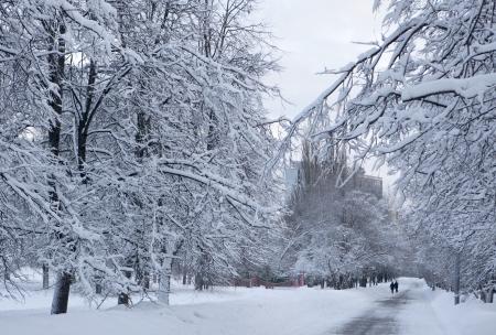 Snowfall in a park Stock Photo - 17859283