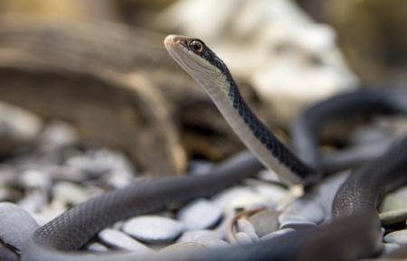 A snake at a terrarium in a zoo Stock Photo - 18310936