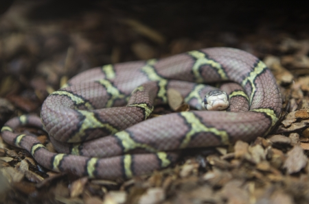A snake at a terrarium in a zoo photo