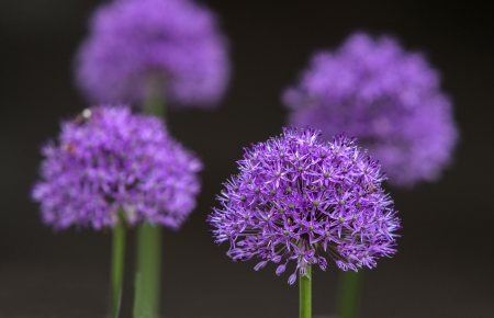 Some of purple flowers in a park
