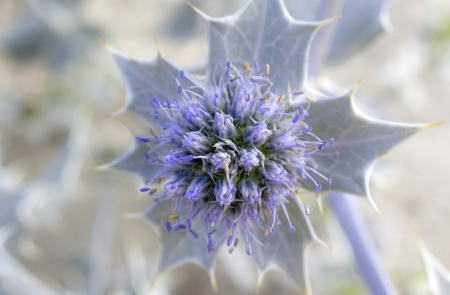 A bur flower with burs background