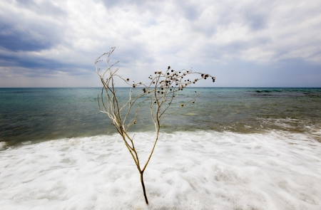 A branch of tree in a sea