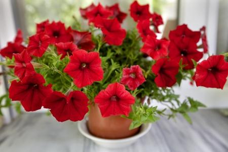 A red flower in a flowerpot