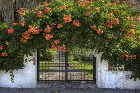 A gate with red flowers around photo