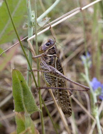 A grasshoppers in a grass