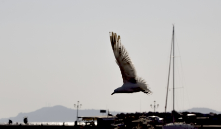 Seagull flies over a port in Greece