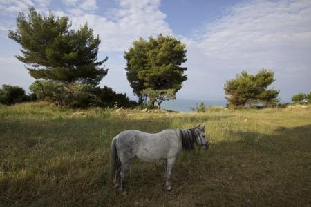 A white horse on a grass photo