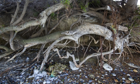 Roots of trees near a beach in Aegean sea in Greece photo