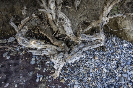 Roots of trees near a beach in Aegean sea in Greece Stock Photo