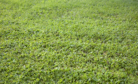 Grass during summer in a park