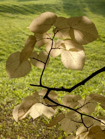 A branch with leafs in a park