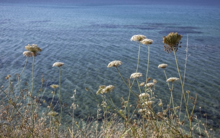 Grass and flowers in front of a sea Stock Photo