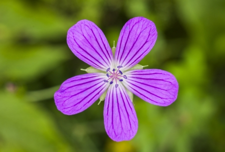 A purple flower in a forest Stock Photo