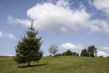 A pine grass and trees on a hill