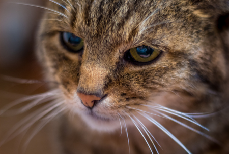 a cats attentive look