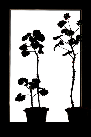 black silhouette of a houseplant on a white background with well-defined stem and leaves