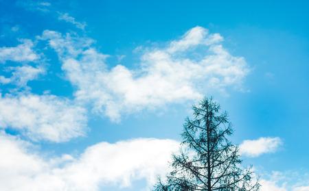 雲と青い空、明るい晴天、右下、木