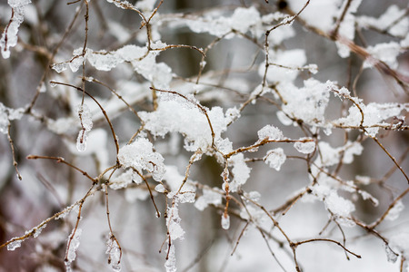 Branches of a tree intertwined with each other and covered with snow and ice