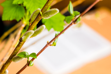 blossoming branches in  classroom, creating a spring mood, free space for inscription Stock Photo