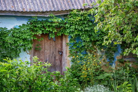 An old dilapidated house. Thickets near  old abandoned home Stock Photo