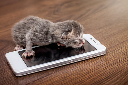 Small newborn blind kitten near a cell phone. Calling mom by cell phone