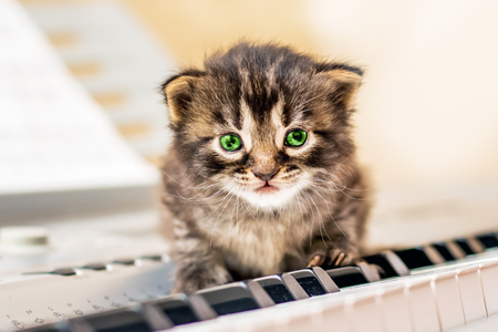 A little kitty with green eyes sits on the piano keys. Learning musical literacy. Future musician, virtuoso
