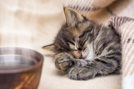 A cup of coffee near a little striped cat that sleeps under a warm blanket. Coffee in bed. It's time to wake up Stockfoto