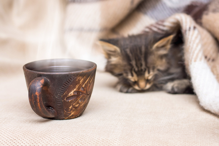 A cup of hot coffee near a kitten that is sleeping. Morning coffee in bed Stock Photo