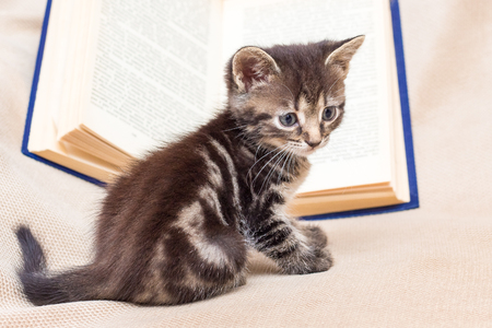 Small striped cat next to the open book. Reading adventure literature Stockfoto