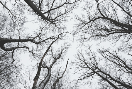 Dark trees, arranged in a circle, without leaves on the background of a dark sky Stock Photo