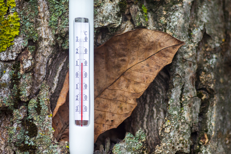 Thermometer on the background of a tree and a dry leaf shows the temperature of the autumn day - 12 degrees of heat