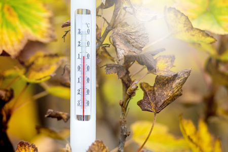 The thermometer on the background of yellow leaves shows the temperature of the autumn day - 12 degrees of heat
